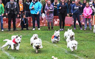 Westie Walk & Fun Day Event