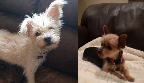 Loyal Rescue | Don Cherry's Pet Rescue Foundation