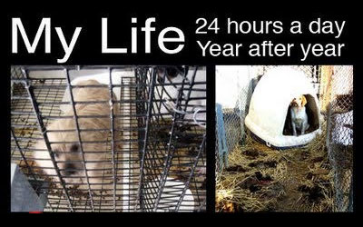 Puppy Mills, we all know they're bad. But . . .