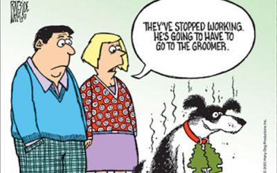 My Dog Stinks! Ha Ha