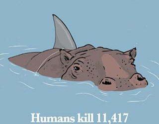 Shark Finning: A traditional right?