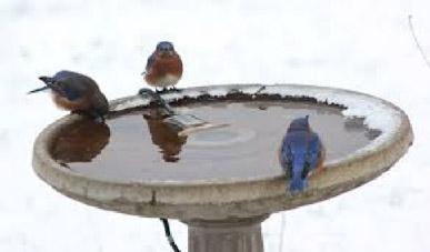 Life is a Bird Bath